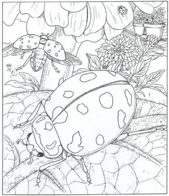 Kleurplaat Natuur Rondom Het Huis Lieveheersbeestjes Kleurplaten