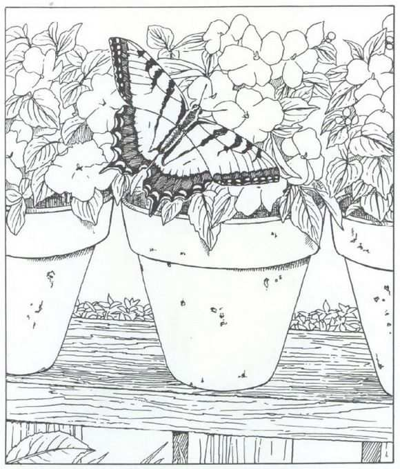 Coloring Page Nature Around The House Nature Around The House