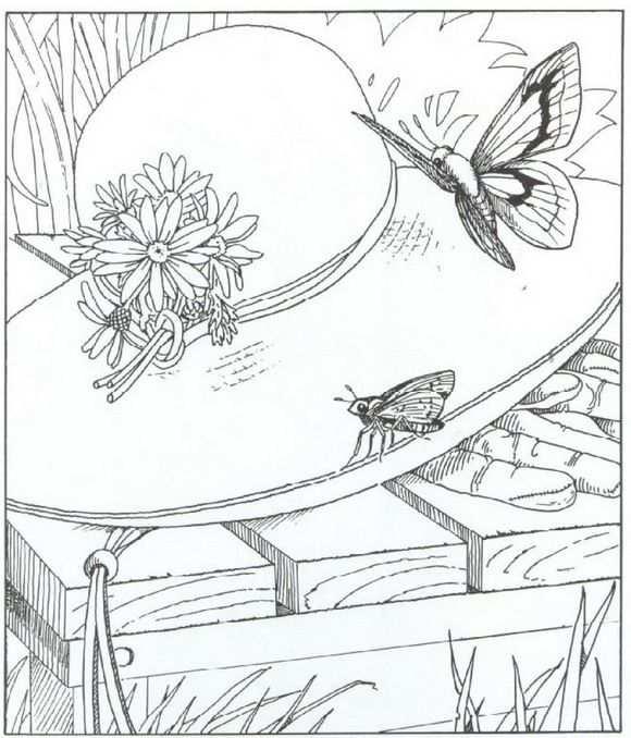 Kleurplaat Natuur Rondom Het Huis Vlinders Met Afbeeldingen