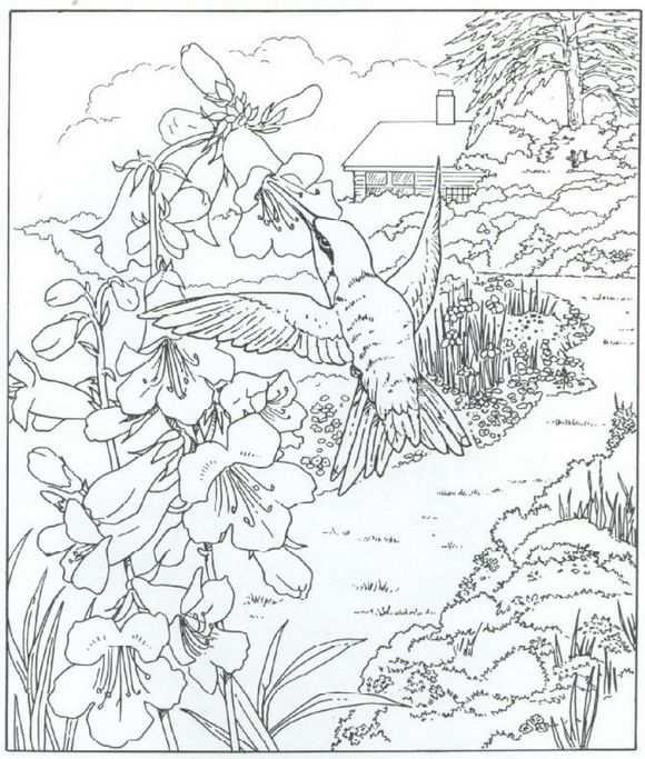 Kleurplaat Natuur Rondom Het Huis Kolibri Kleurplaten Dieren