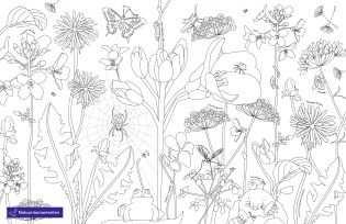 Kleurplaten Van Natuurmonumenten Dieren Herfst Winter En