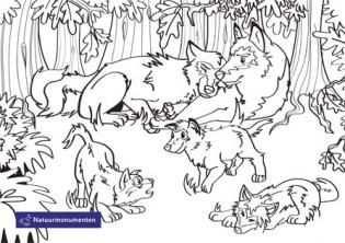 Kleurplaten Met Afbeeldingen Kleurplaten Wolven Dieren