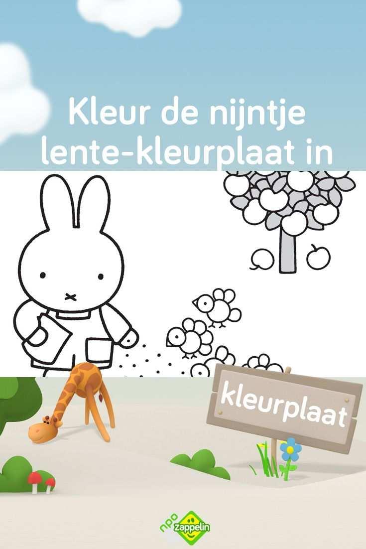 Print Deze Leuke Lente Kleurplaat Van Nijntje En Kleur Hem In