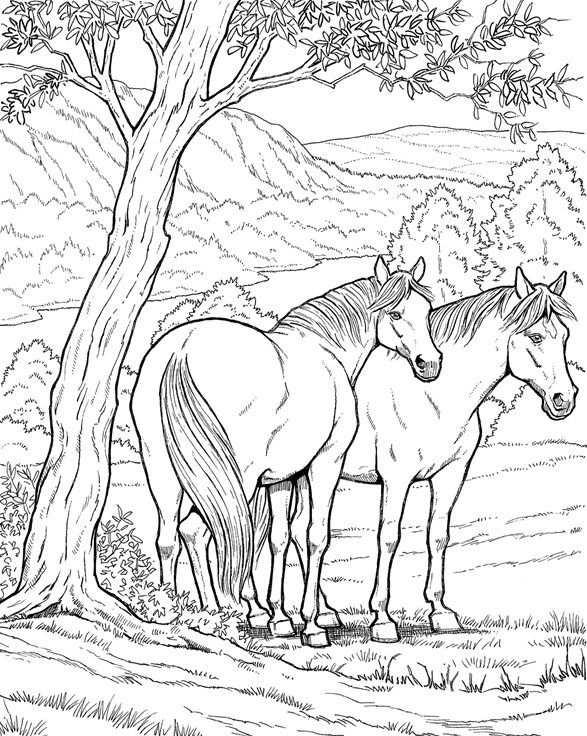 Paarden Kleurplaat In 2020