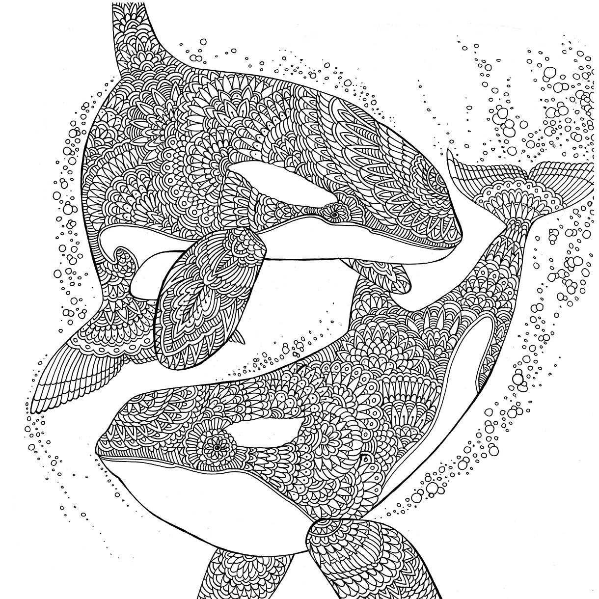 Orcas The Aquarium Colouring Book Richard Merritt Orcas