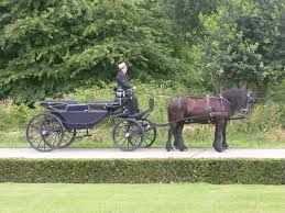 Paard Met Koets Paarden Natuur
