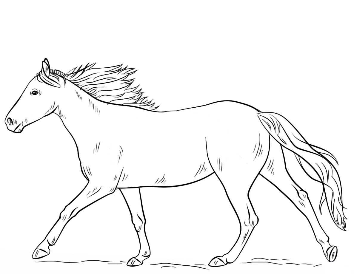 Animals Coloring Pages Horses Coloring Pages Horse Coloring Pages
