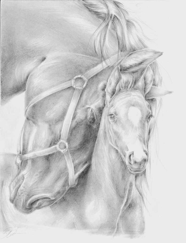 Merrie Veulen Met Afbeeldingen Paard Tekeningen Dieren