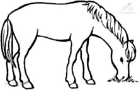 Kleurplaat Kleurplaat Paard 1 Jpg Kleurplaten Paarden Dieren