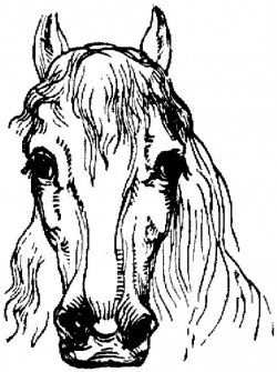 Horse Coloring Pages Are Both Fun And Educational Most Of These