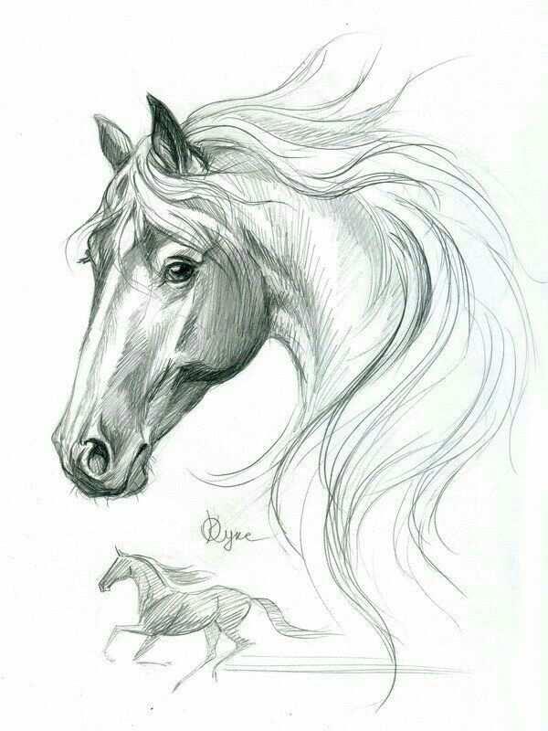 Mooi Getekend Paardenhoofd Met Prachtige Manen Kijkt Ook