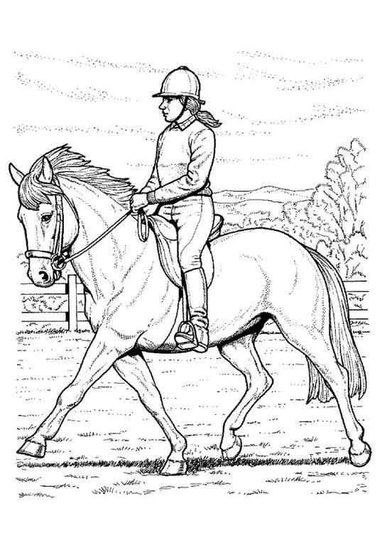 Kleurplaat Paard Rijden Kinderen Leren Terwijl Ze Kleuren