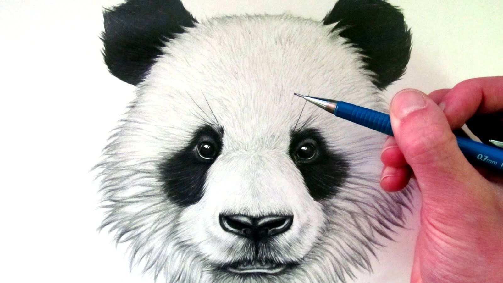 Het Panda Hoofd Om Na Te Tekenen Als Filmpje Ik Heb Dit Filmpje