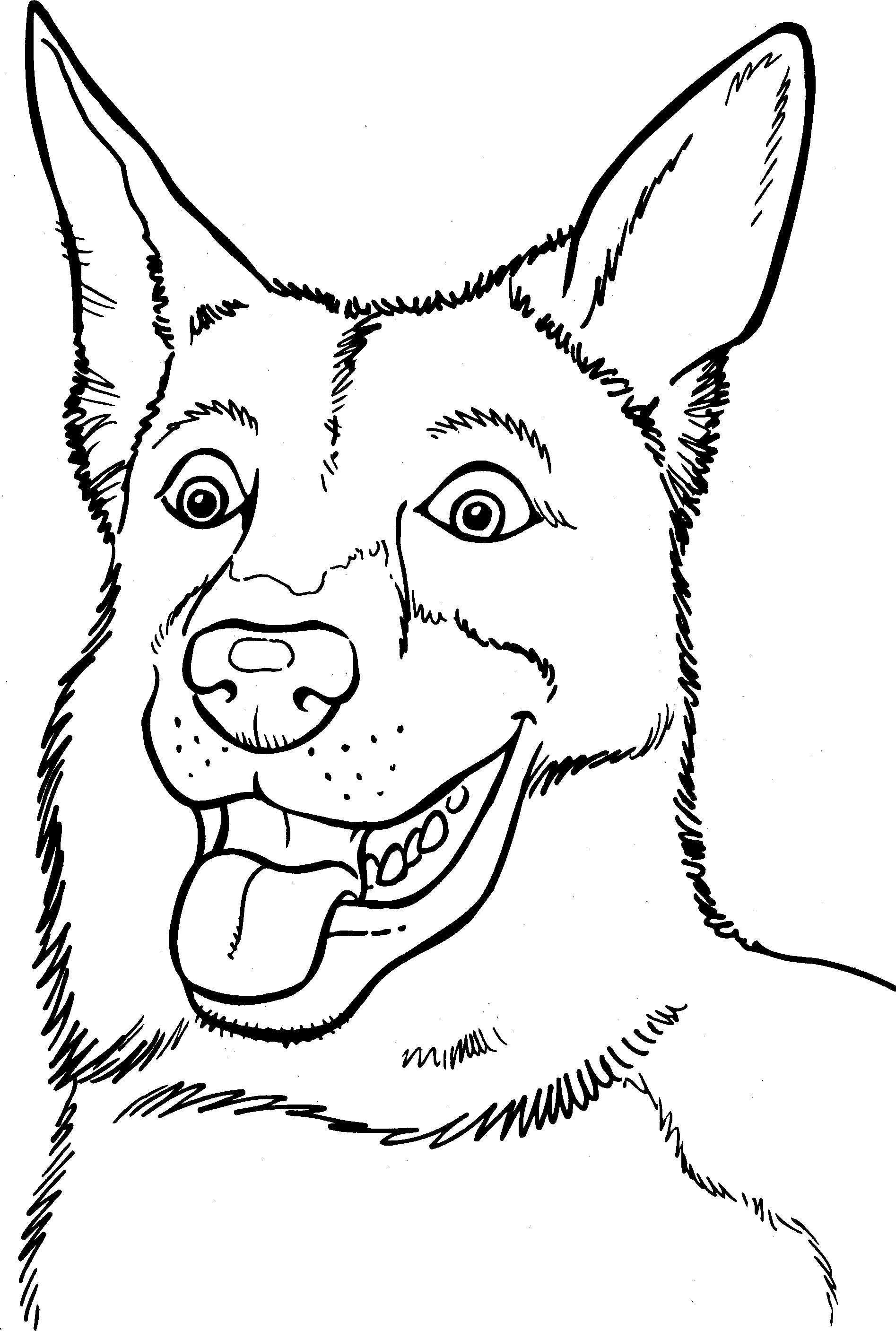 Honden Kleurplaat Met Afbeeldingen Dieren Kleurplaten Hond