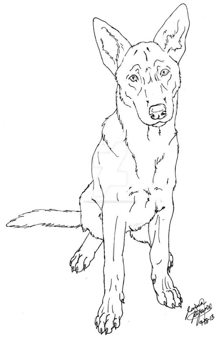 Belgian Malinois By Canis Simensis On Deviantart Dog Coloring