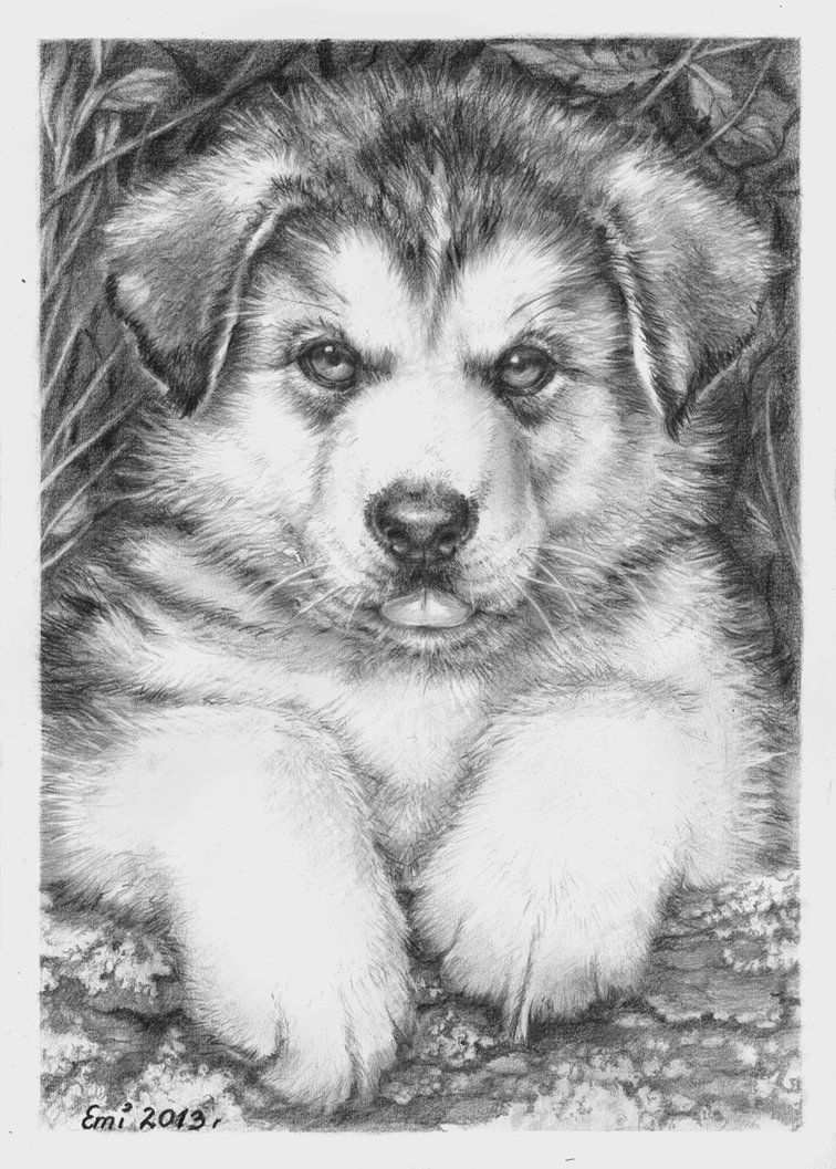 Husky Puppy Met Afbeeldingen Dieren Tekenen Kleurplaten Honden