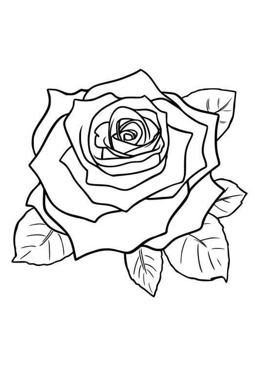 Afbeeldingsresultaat Voor Kleurplaat Roos Met Afbeeldingen