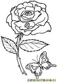 Afbeeldingsresultaat Voor Roos Kleurplaat Butterfly Coloring