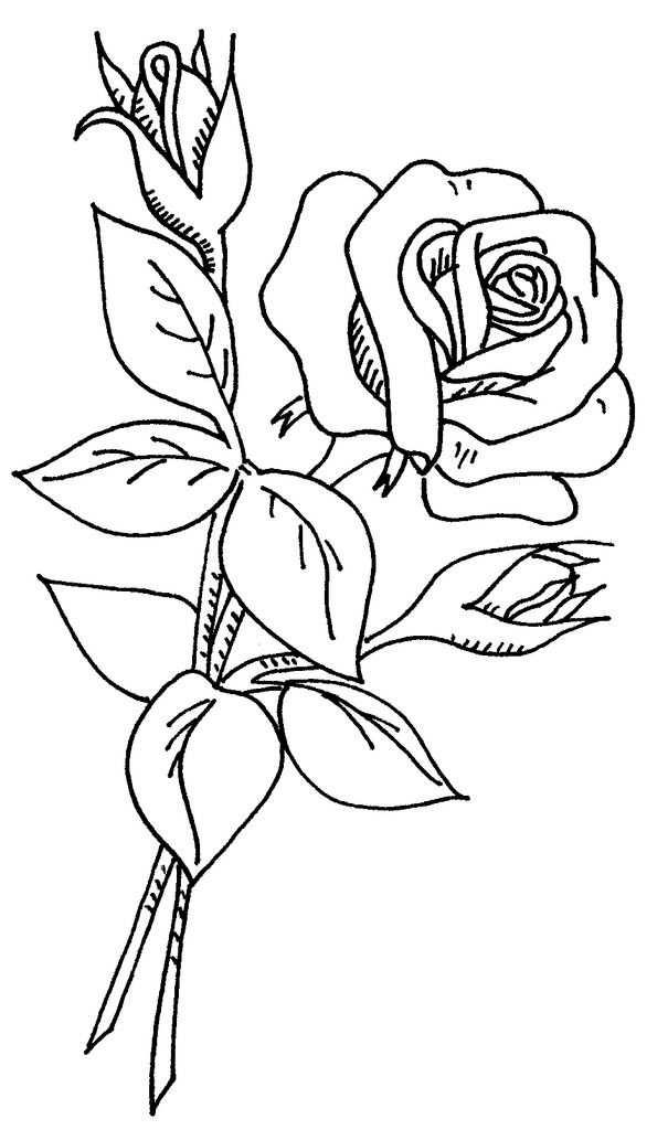 Wb Flowers 2 37 Kleurplaten Bloemen Tekenen En Bloem Schetsen