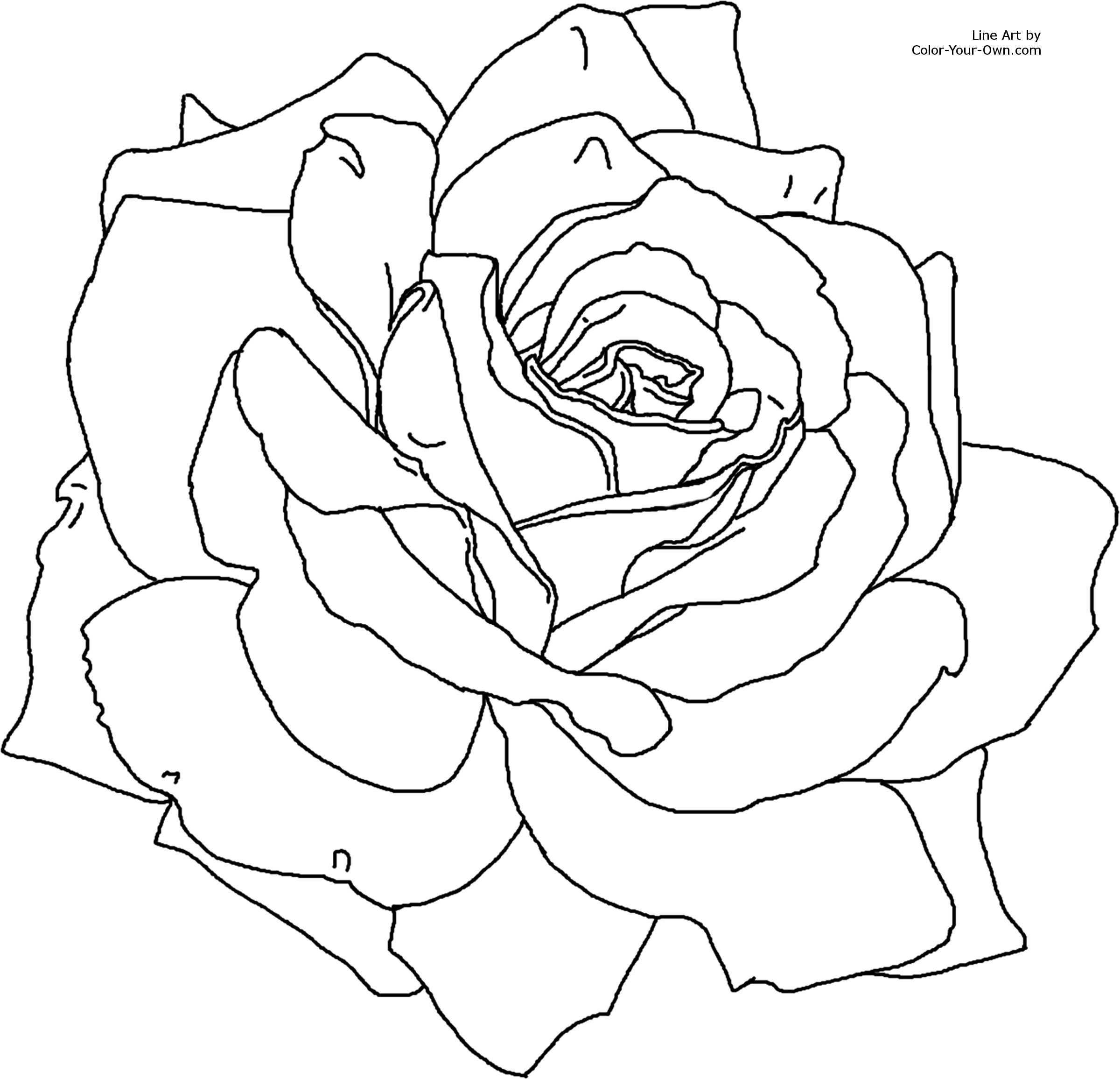 Rose Met Afbeeldingen Bloemen Tekenen Kleurplaten Rozen Tekening