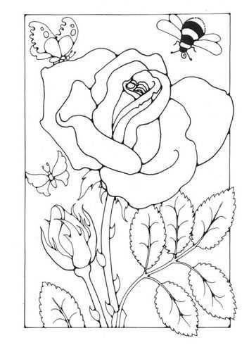 Kleurplaat Roos Met Bij En Vlinder Afb 18703 Kleurplaten