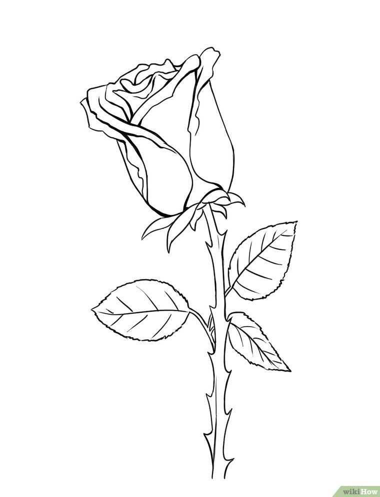 Een Roos Tekenen Met Afbeeldingen Roos Tekeningen