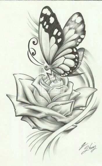 Vlinder Op Roos Vlinder Tekening Bloemen Tekenen Vlinders