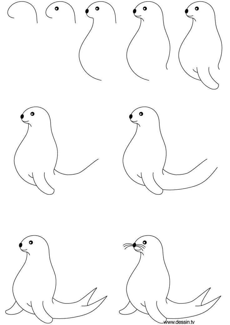 Afbeeldingsresultaat Voor Zeehond Tekenen In Stappen Dieren