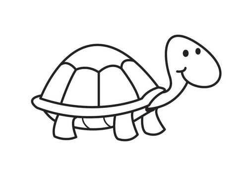 Kleurplaat Schildpad Met Afbeeldingen Schildpad Tekening