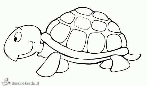 Kleurplaat Van Een Schildpad Archidev Schildpad Tekening