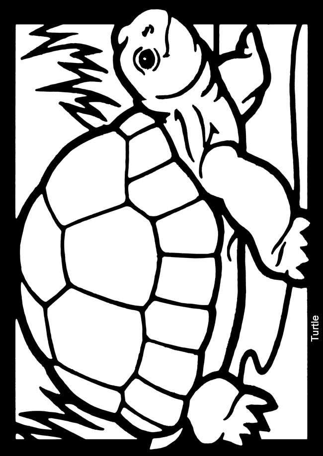 Kleurplaat Schildpad Met Afbeeldingen Kleurplaten Schildpad