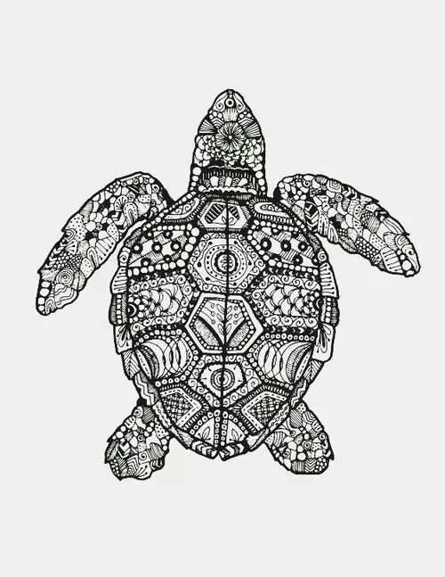 Pin By Kim Ellington On Sea Turtle Art With Images Zentangle