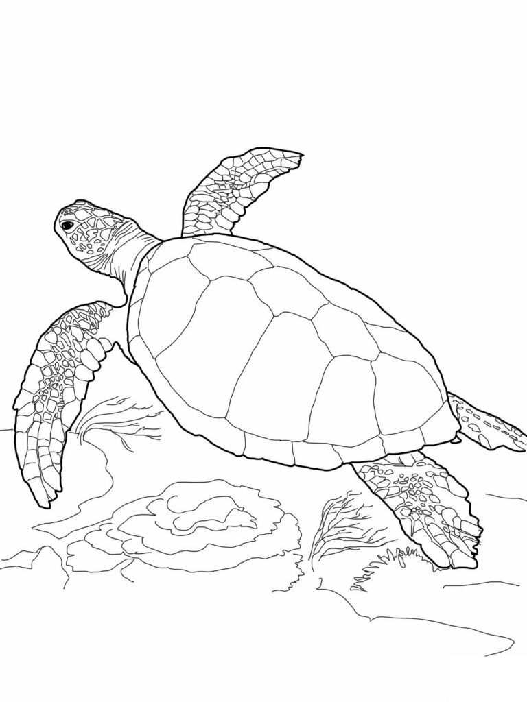 Free Printable Turtle Coloring Pages For Kids Turtle Drawing