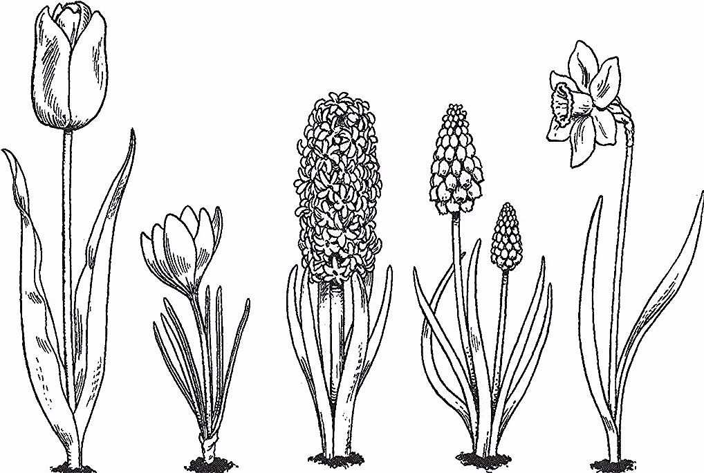 Pin On 6 Flower