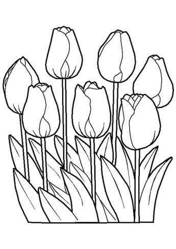 Bloemen Met Afbeeldingen Kleurplaten Gratis Kleurplaten