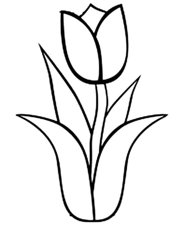 Tulips An Illustration Of Single Double Bloom Tulip Coloring Page