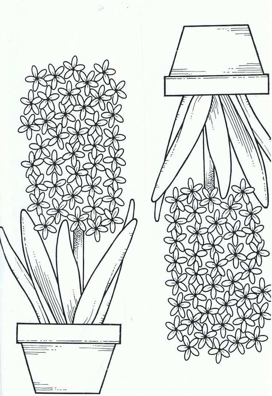 Kleurplaat Hyacint With Images șabloane Felicitări Preșcolari