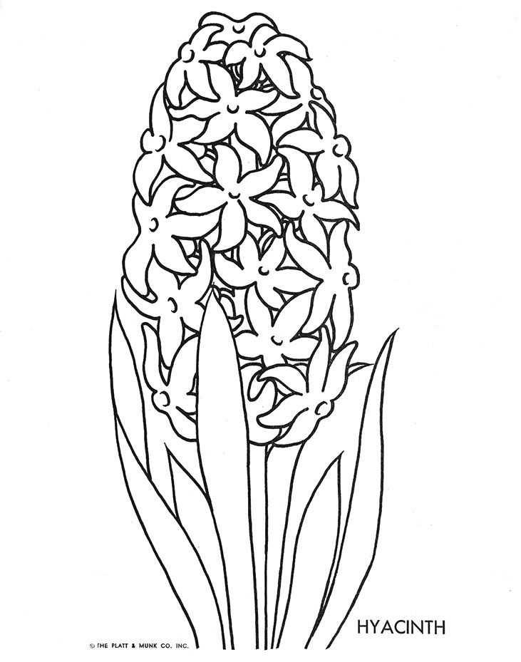 Flowers To Color S Izobrazheniyami Cvetochnye Raskraski Cvety