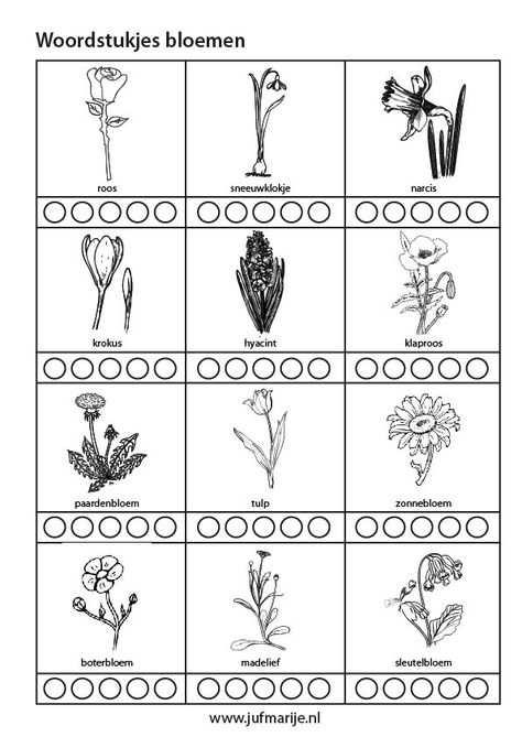 Werkblad Woordstukjes Bloemen Bloemen Lentebloemen Bloem Tuinieren