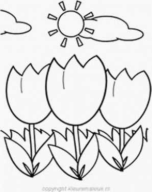 Tulpenveld Con Imagenes Lentes Primavera