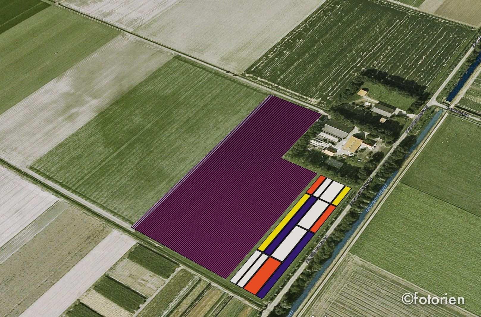 Mondriaan Tulpenveld De Noordoostpolder Met Afbeeldingen