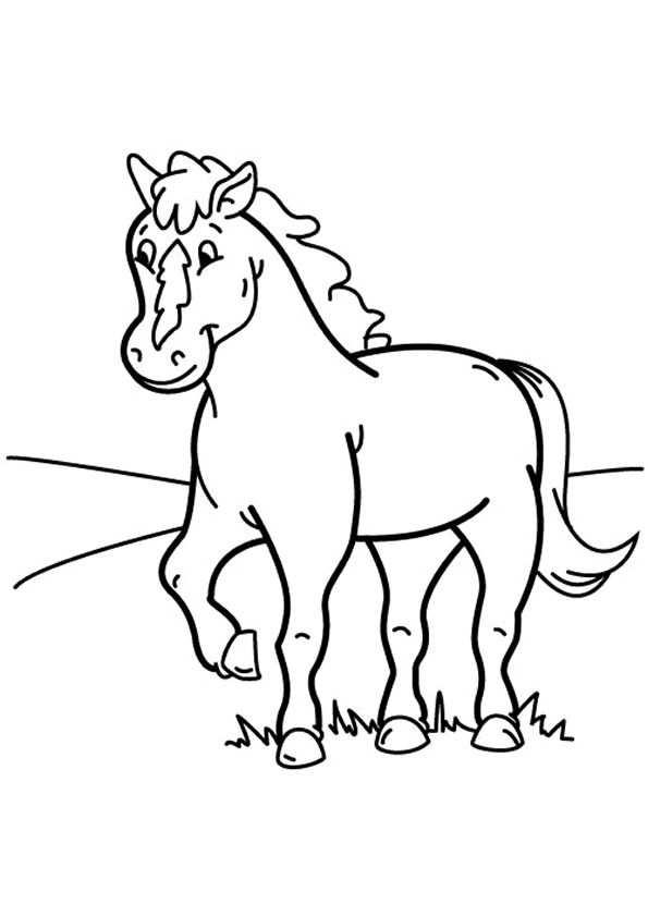 Paarden Zijn Zulke Lieve En Mooie Dieren Maar Er Een Mooie