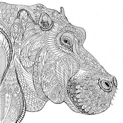 Nijlpaard Nijlpaard Kleurplaten Zebra S