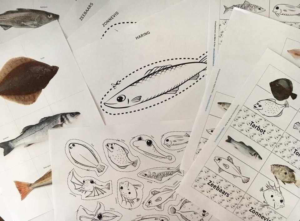 Lesmateriaal Voor De Kleuterklas Over Vissen In De Noordzee De