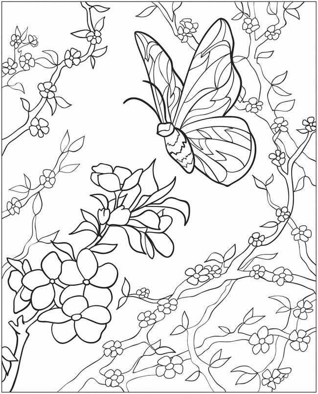 kleurplaat vlinder bloem
