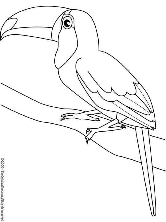 Kleurplaat Vogels Kleurplaten Dieren Kleurplaten Vogels Tekenen