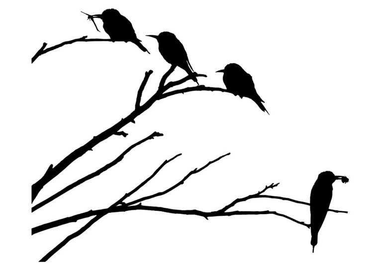 Kleurplaat Vogels Op Tak Kleurplaten Vogels Takken