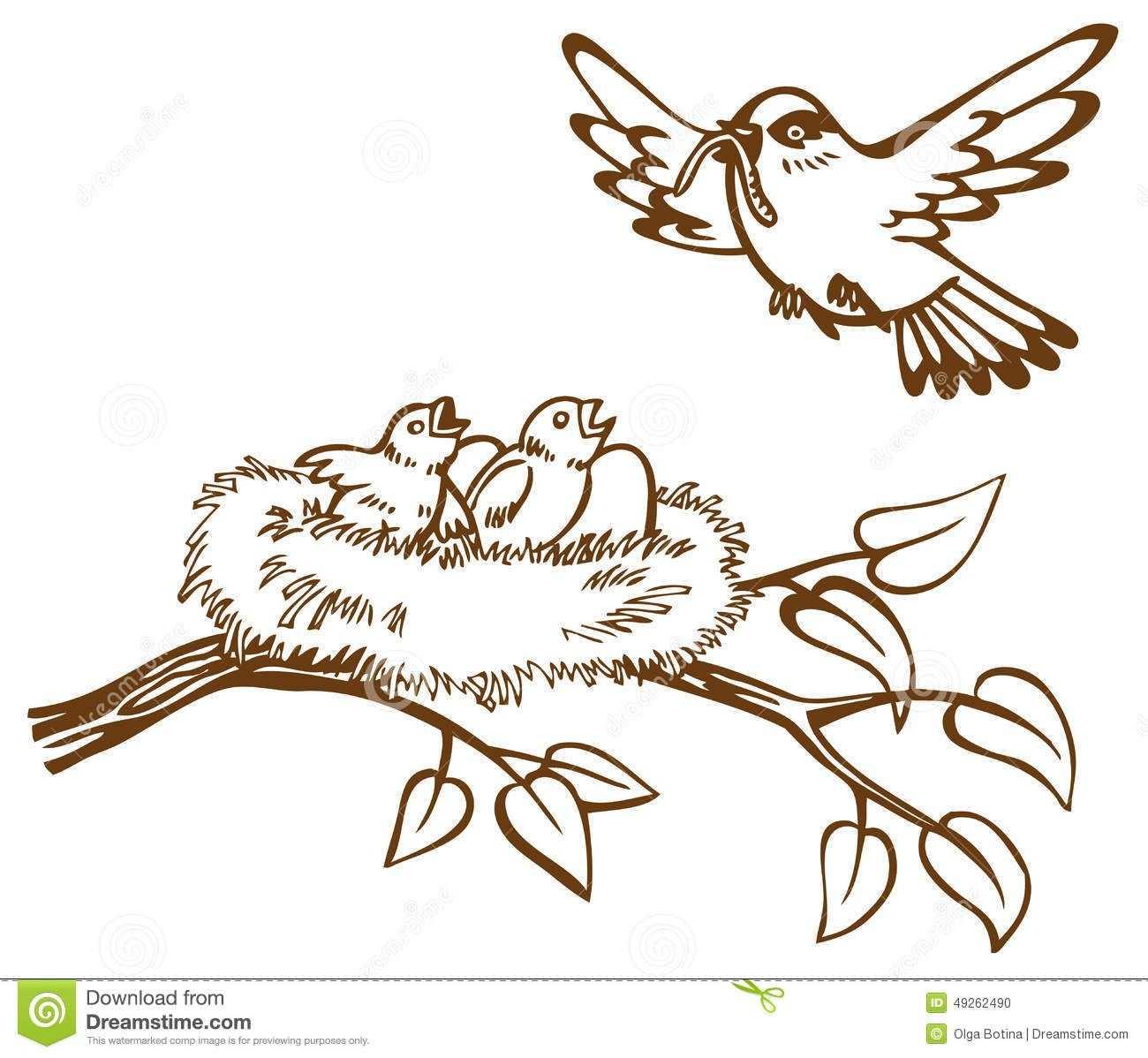 Vogelnest Tekening Google Zoeken Vogels Tekenen Schetsen