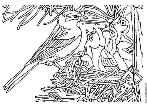 Kleurplaat Vogel Met Nest Kleurplaten Vogels Gratis Kleurplaten