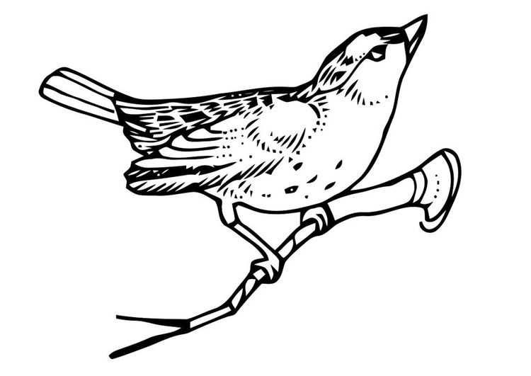 Kleurplaat Vogel Op Tak Met Afbeeldingen Kleurplaten Gratis